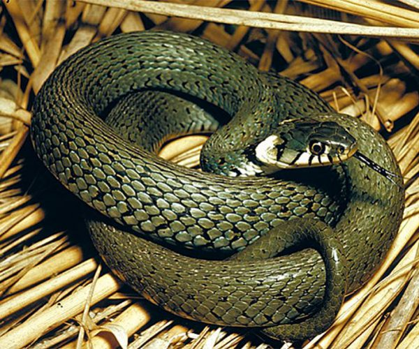 Борьба со змеями от ПроКомфорт